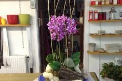 P 1  Dekorative Pflanzschale mit Orchideen